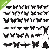 Butterflyl silhouettes vector