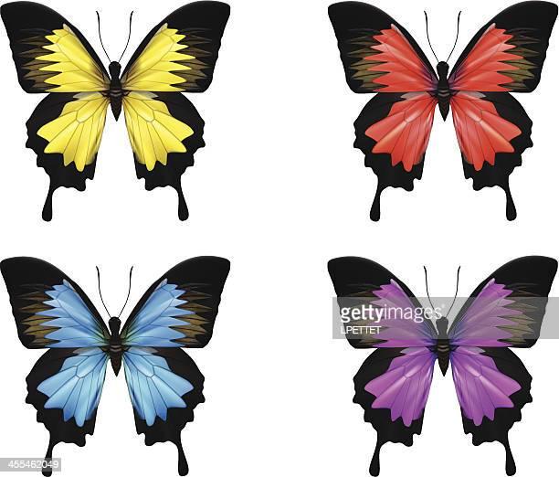 Butterfly-Vector Illustration