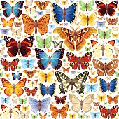 Butterlies icon set