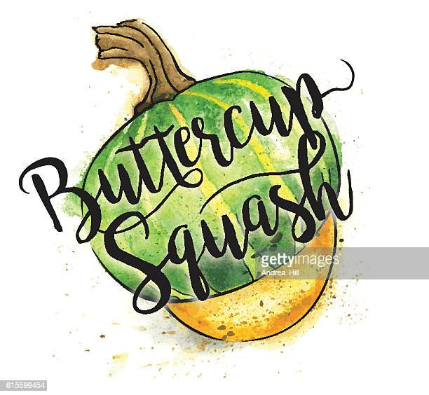 Butternut Squash Painted in Watercolor With Text - Vector Illustration