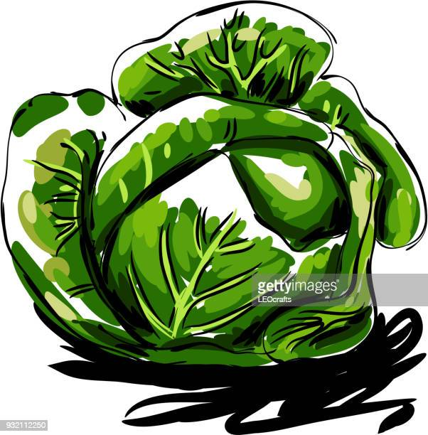 cabbage drawing - white cabbage stock illustrations, clip art, cartoons, & icons