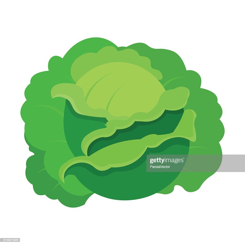 Cabbage icon cartoon. Single plant icon from the big farm,