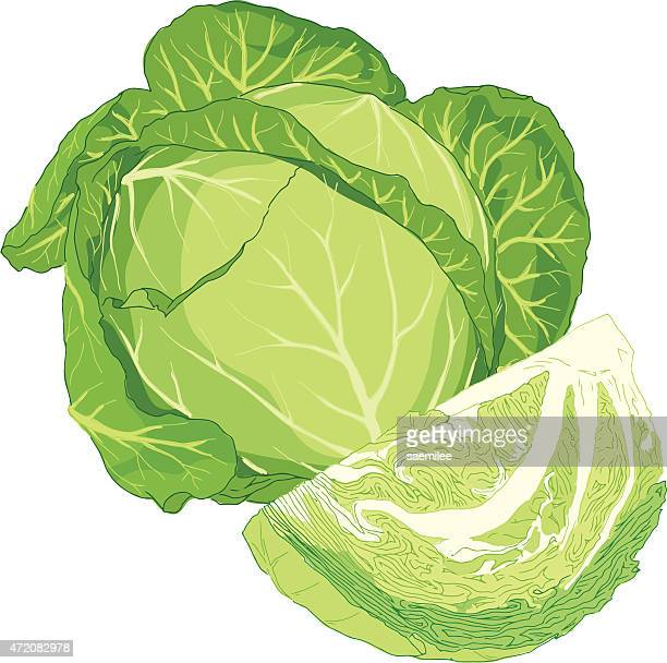 cabbage - cabbage stock illustrations