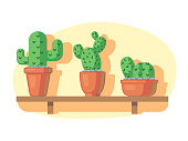 Cacti on wooden shelf