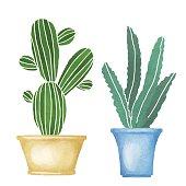 Cacti set, succulents