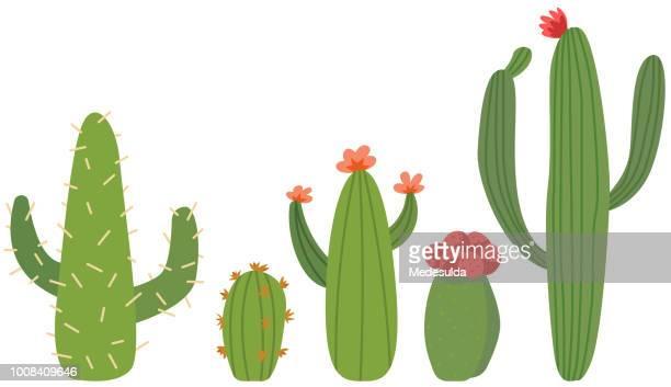 illustrations, cliparts, dessins animés et icônes de fleur de cactus vector cute cartoon - plante verte