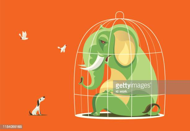 caged elephant communicating with pigeon and dog - prisoner vector stock illustrations