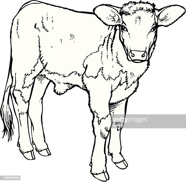 calf - calf stock illustrations, clip art, cartoons, & icons