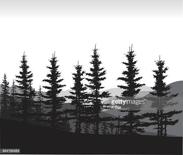 calgary pines - treelined stock illustrations, clip art, cartoons, & icons
