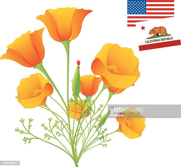 california golden poppy - poppy stock illustrations, clip art, cartoons, & icons