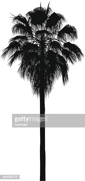 californian palm tree - coconut palm tree stock illustrations, clip art, cartoons, & icons