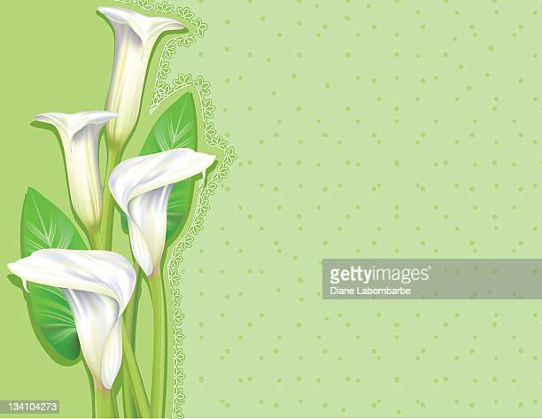 calla lilies background - calla lily stock illustrations, clip art, cartoons, & icons