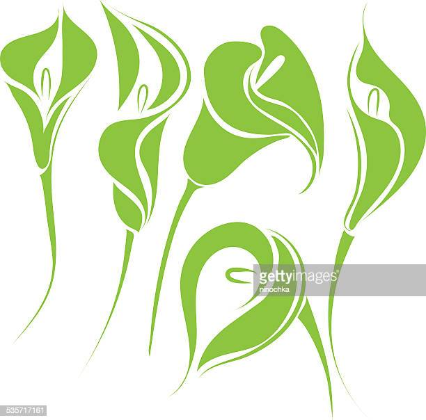 calla lilies - calla lily stock illustrations, clip art, cartoons, & icons