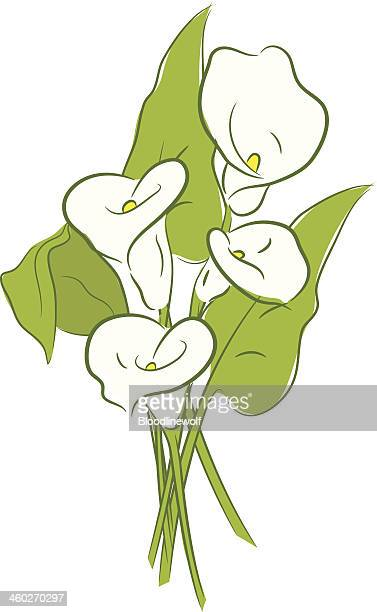 calla lillies - calla lily stock illustrations, clip art, cartoons, & icons