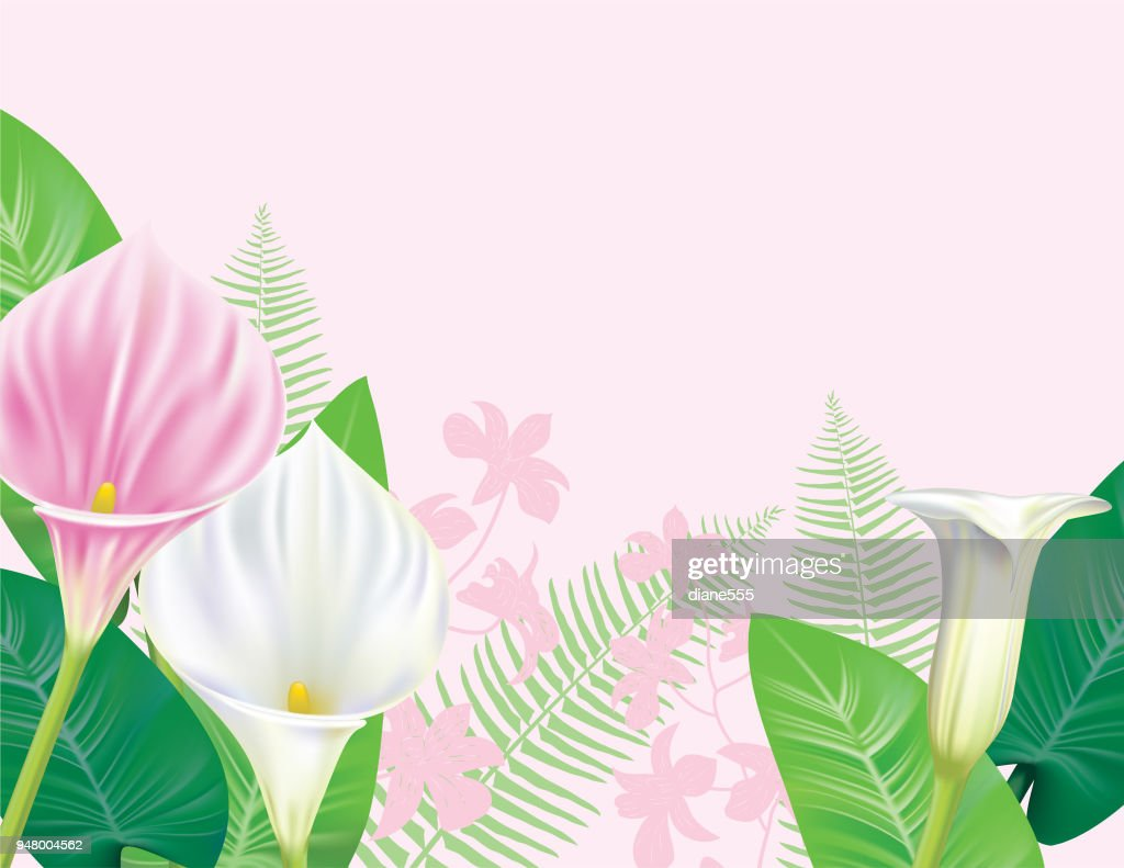Calla Lily Grenze Stock Illustration Getty Images