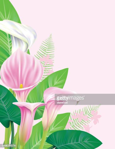 calla lily border - calla lily stock illustrations, clip art, cartoons, & icons