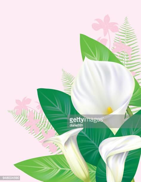 calla lily border - calla lily stock illustrations