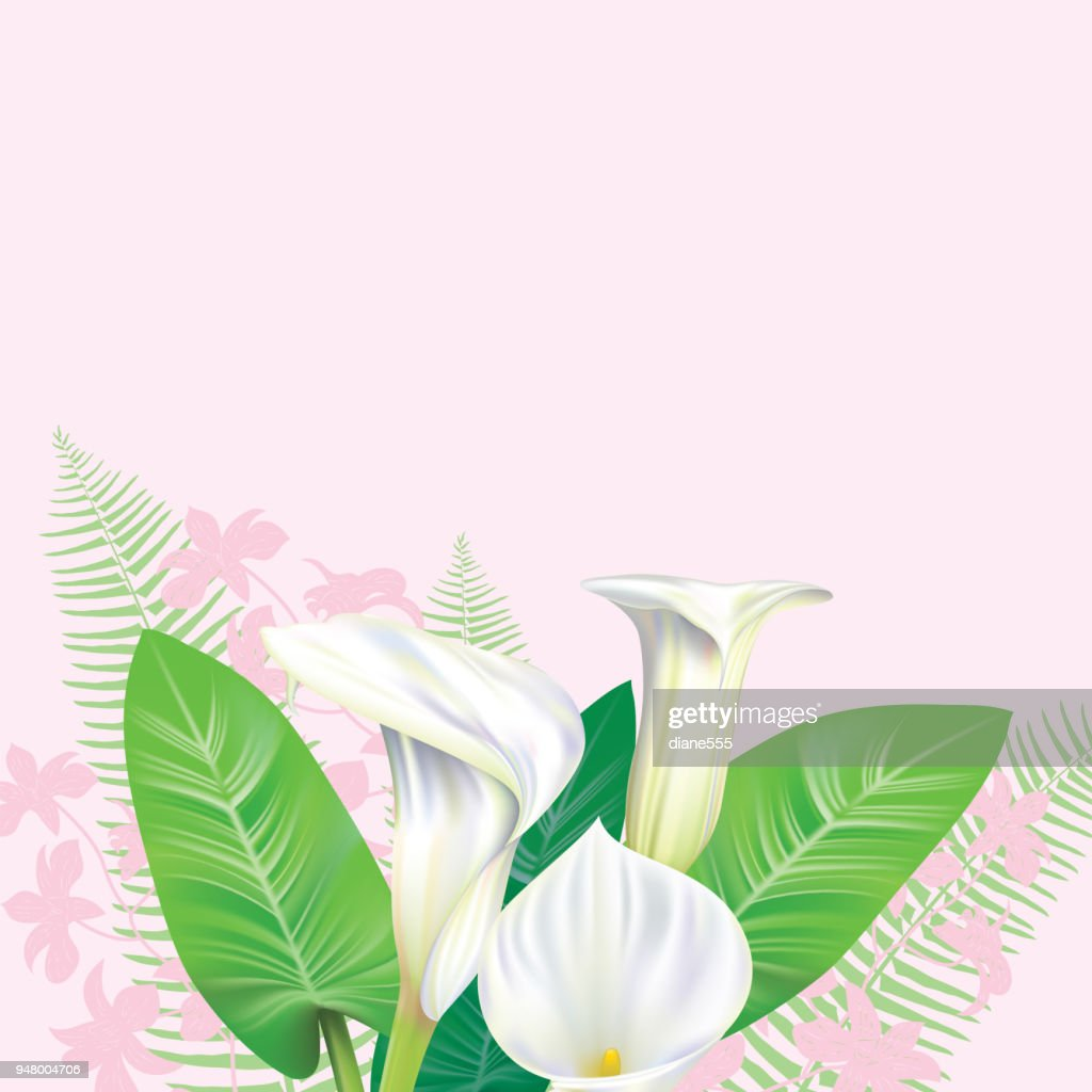 Calla Lily Border Stock Illustration Getty Images