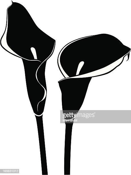calla lily silhouette - calla lily stock illustrations, clip art, cartoons, & icons