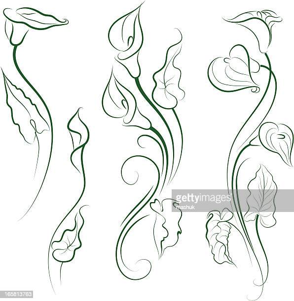 calla lily - calla lily stock illustrations, clip art, cartoons, & icons