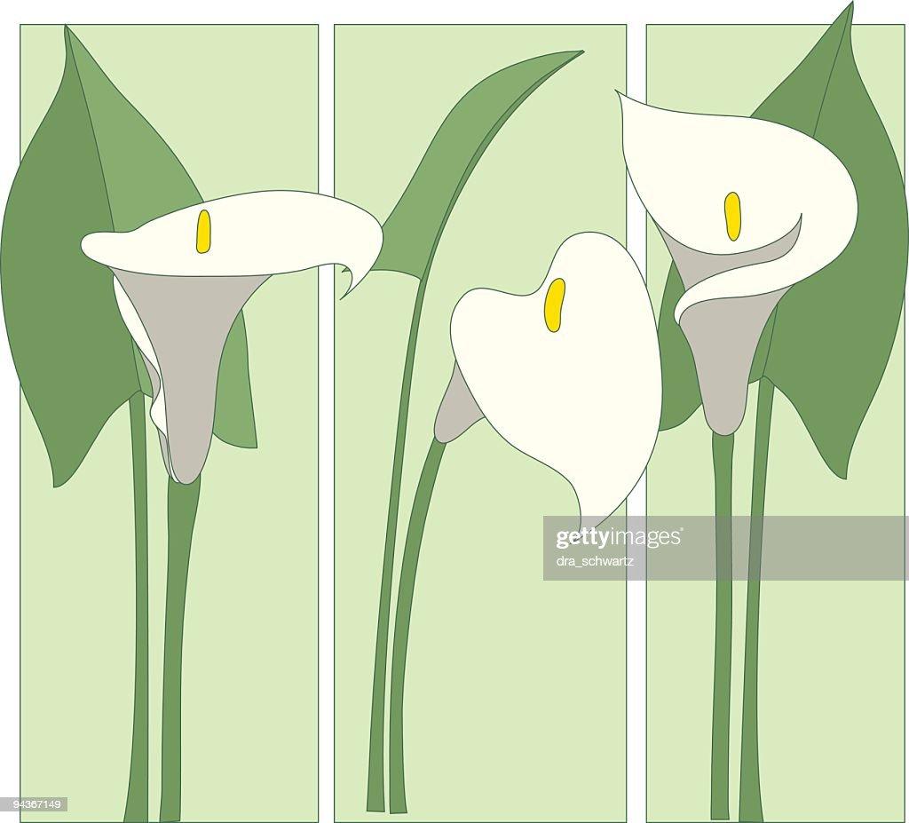 Calla Lily : stock illustration