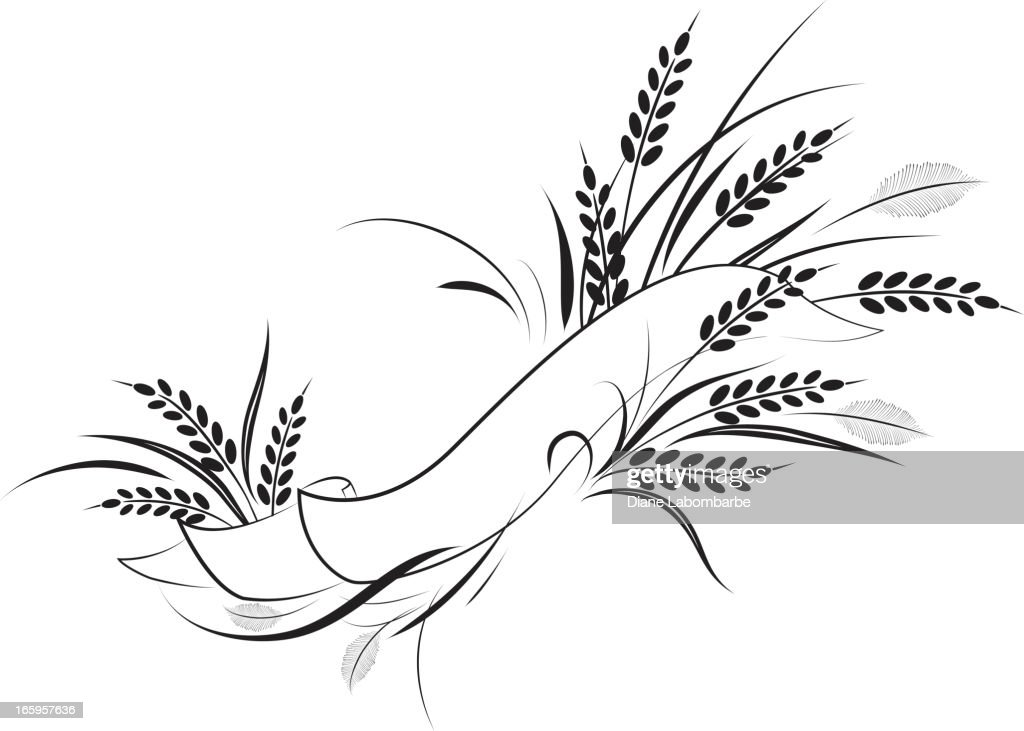 Calligraphic Wheat Banners Vector Illustration