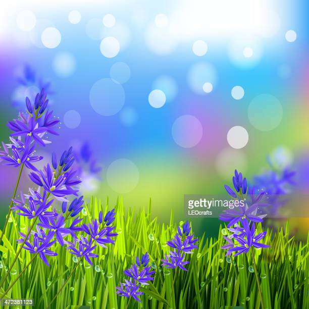 Camas Lily Background