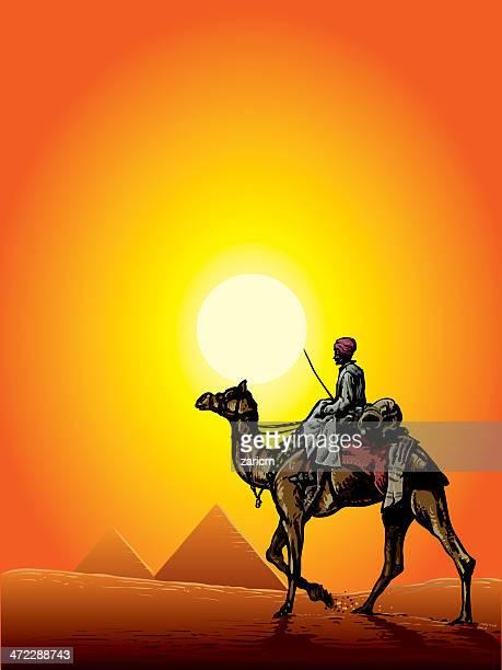 Camello y las Pirámides