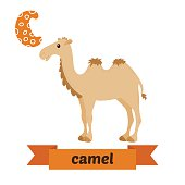 Camel. C letter. Cute children animal alphabet in vector. Funny