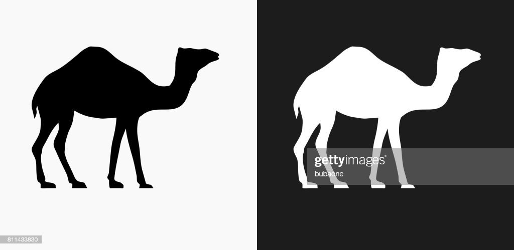 Camel Icon on Black and White Vector Backgrounds