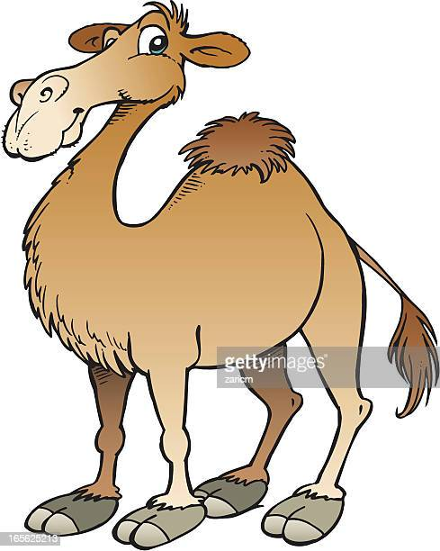 kamel - camel active stock-grafiken, -clipart, -cartoons und -symbole