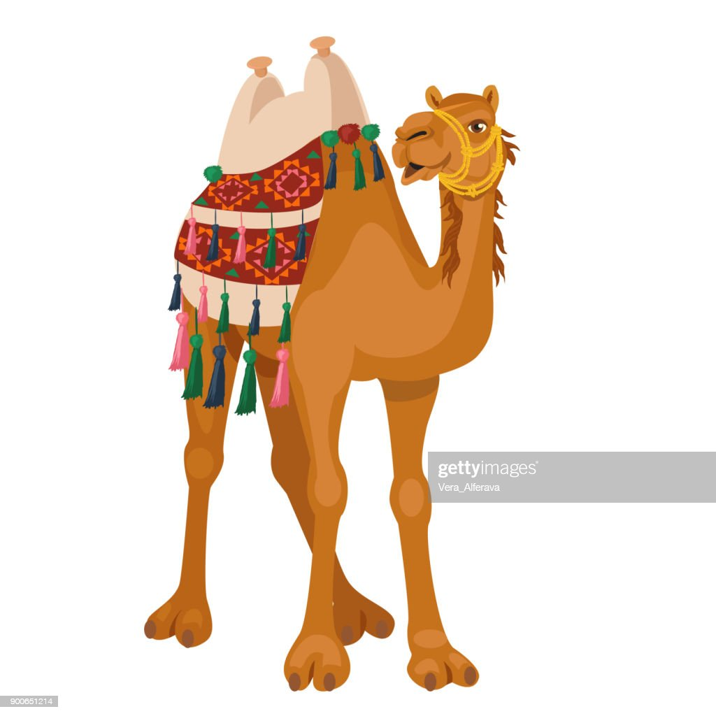 Camel with traditional colorful decorated