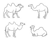 Camels in outlines - vector illustration