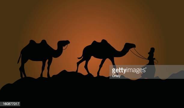 Camels & wanderer in desert