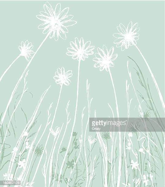 ilustraciones, imágenes clip art, dibujos animados e iconos de stock de camomile campo - planta de manzanilla