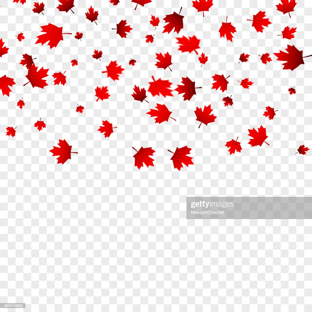 Canada Day maple leaves background. Falling red leaves for Canada Day 1st July