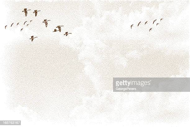 canada geese flying and cloudscape - goose bird stock illustrations