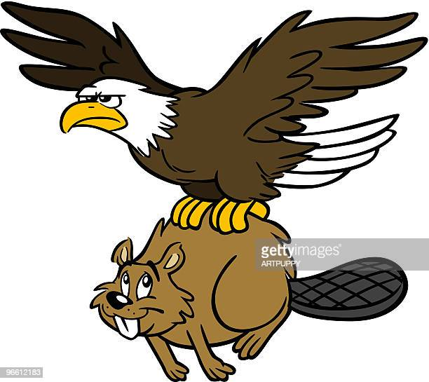 canadian beaver and american eagle - funny beaver stock illustrations