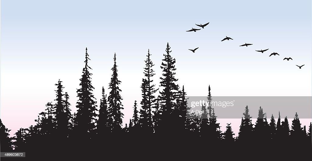Canadian Geese Glying Above The Trees