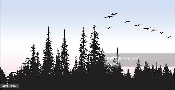 canadian geese glying above the trees - coniferous tree stock illustrations, clip art, cartoons, & icons