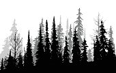 Canadian Pines