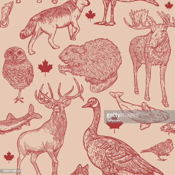 canadiana wildlife seamless pattern - animal themes stock illustrations