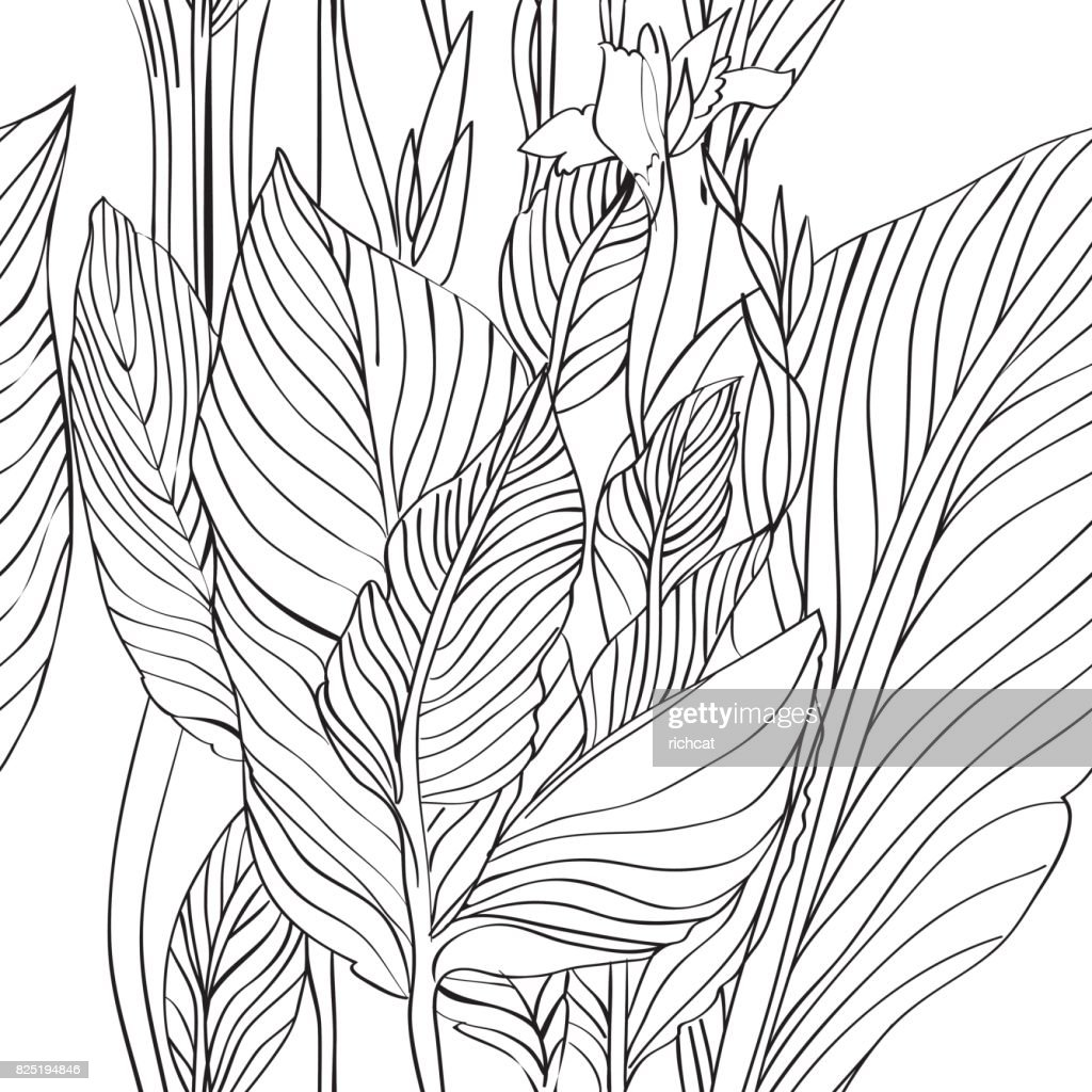 Canna leaves pattern