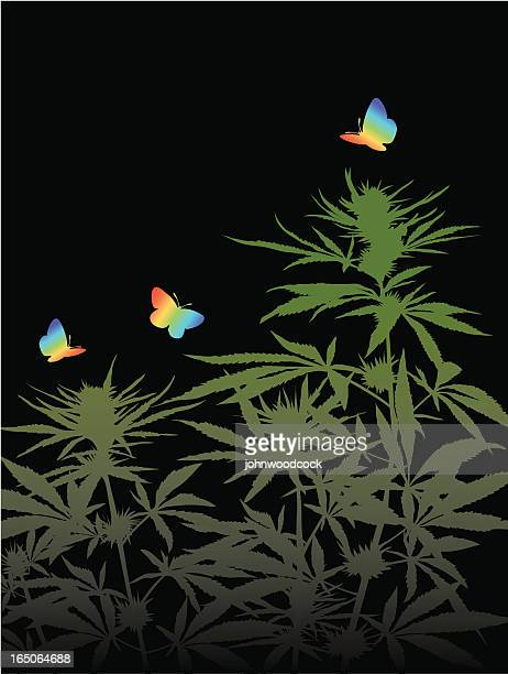 cannabis background two - cannabis plant stock illustrations, clip art, cartoons, & icons
