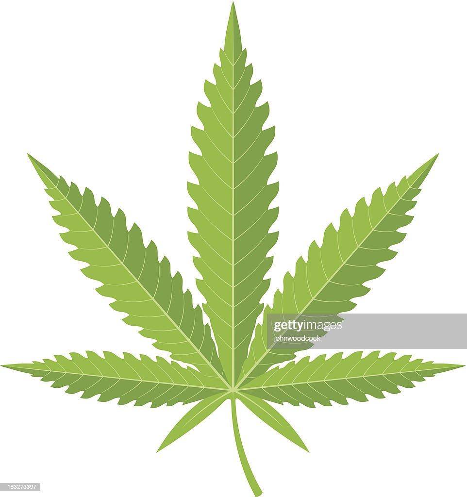 Cannabis leaf illustration