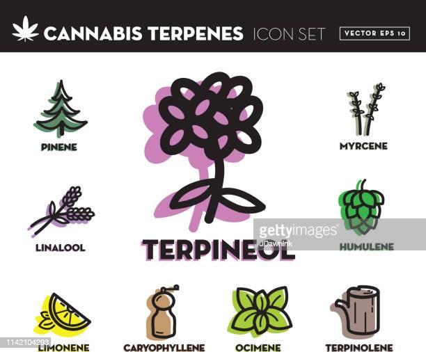 cannabis marijuana ocimene icon set with text - cannabinoid stock illustrations