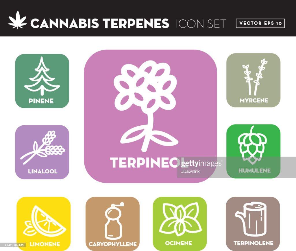Ícone da marijuana Ocimene do cannabis ajustado com texto : Ilustração