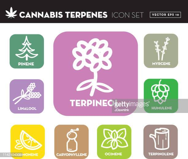 cannabis marijuana ocimene icon set with text - marijuana leaf text symbol stock illustrations, clip art, cartoons, & icons