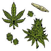 cannabis marijuana set