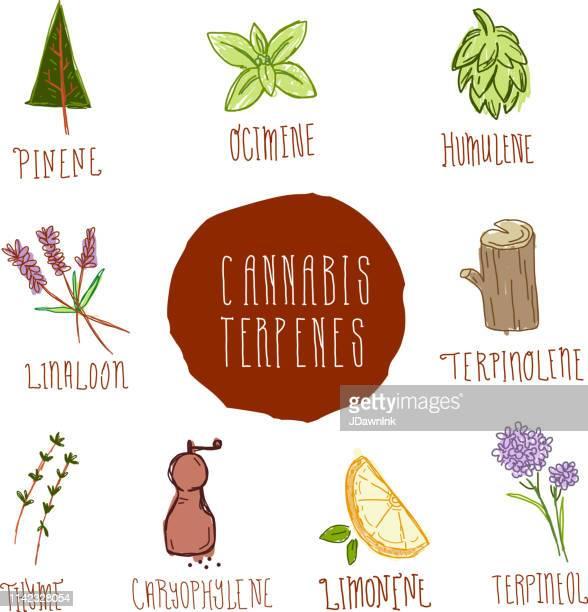 cannabis marijuana terpinene icon set with text - cannabinoid stock illustrations